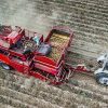farmers harvested potatoes top view aerial photography with drone