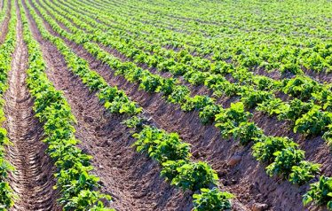 IFA Tells Farmers to Grow for Their Markets