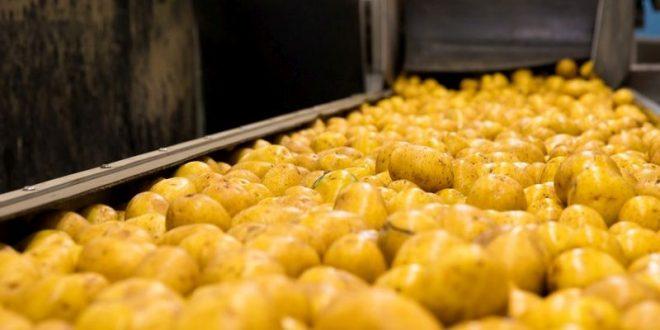 potato processing