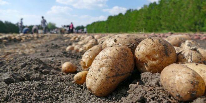 Wolrd Potato Congress